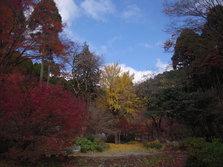 环境艺术之森——红叶之森