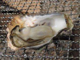 花房里的牡蛎烧烤3