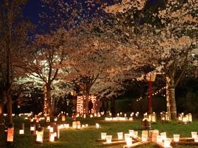 樱花灯笼节