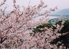 唐津城——全方位赏樱好去处2.jpg