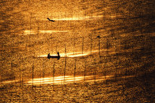 有明海の風景(有明海沿岸)