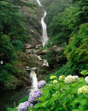 回头见瀑布——七彩绣球花