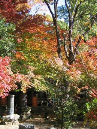 仁比山神社——御田舞的秋日