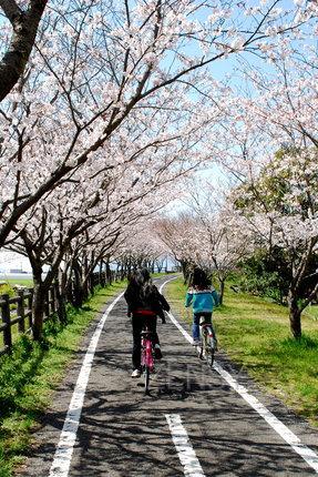 徐福自行车道——樱花伴你行