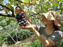 秋季推荐——美味葡萄吃到饱