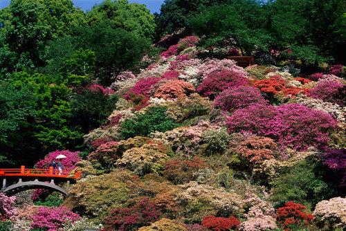 东山公园——四季花海洋