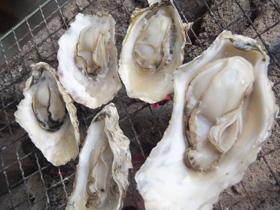 冬季推荐——太良竹崎牡蛎