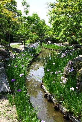 莲池公园菖蒲.JPG