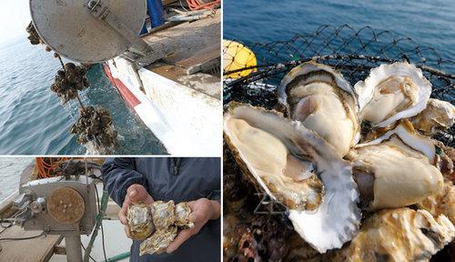 唐津牡蛎(幸多里)