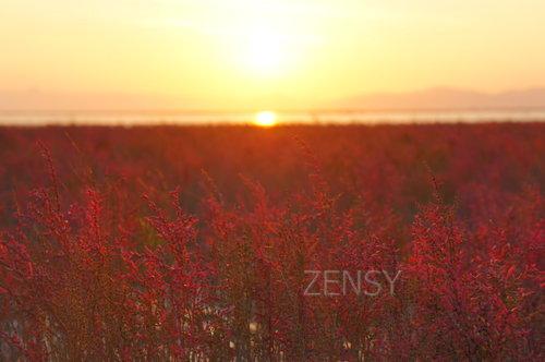 干泻YOKA公园的夕阳