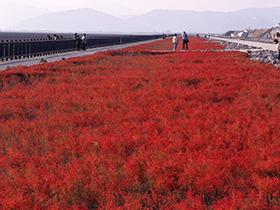 秋枫乍起——红色海洋
