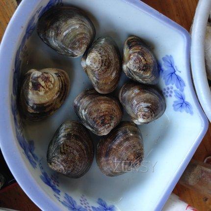 竹崎海产——竹崎牡蛎